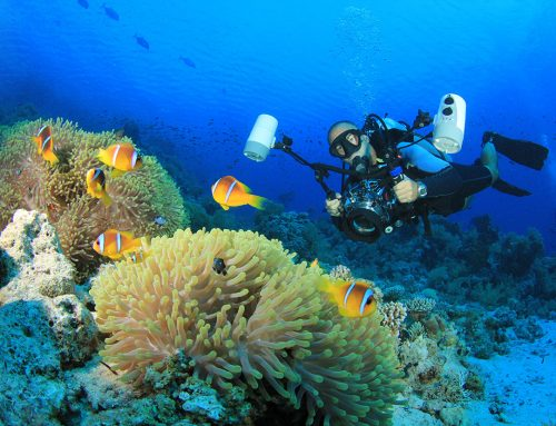 The PADI Adventures in Diving program